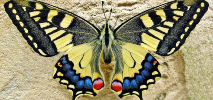 Soñar con Bichos Mariposa